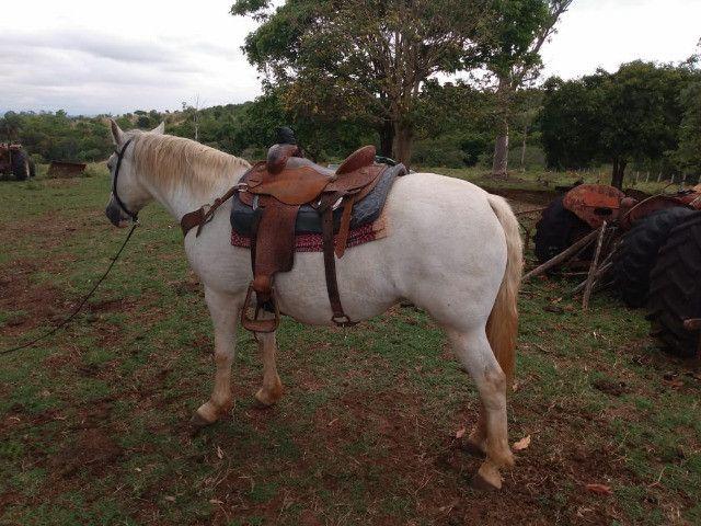 Vendo égua e potra Quarto de milha - Foto 4