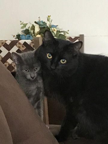 Gatos (ler anúncio) - Foto 2