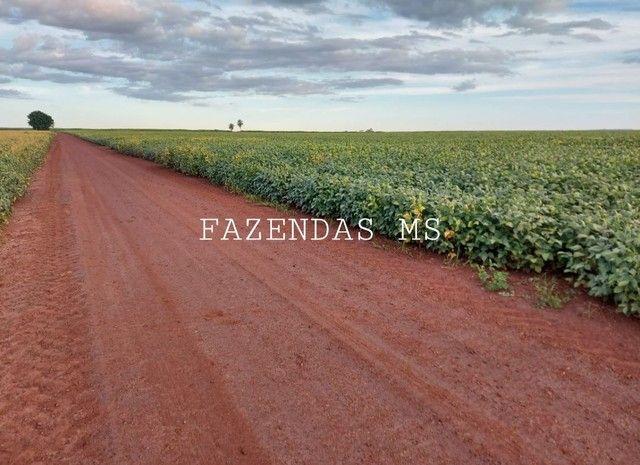 Fazenda 245 hectáres Dourados-MS terra argilosa 40 anos em lavoura - Foto 5