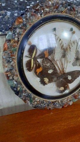 Quadro antigo com borboletas - Foto 6