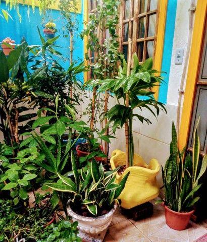 Jardineiro, Corte de Grama, Horta Orgânica - Foto 2