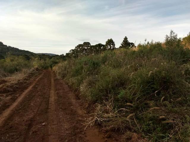 Fazenda para plantio - Foto 5