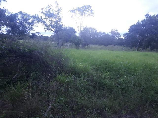 Sitio próximo do manso - Foto 16