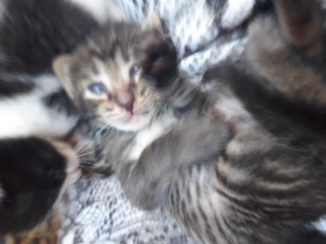 Gatos - Foto 2