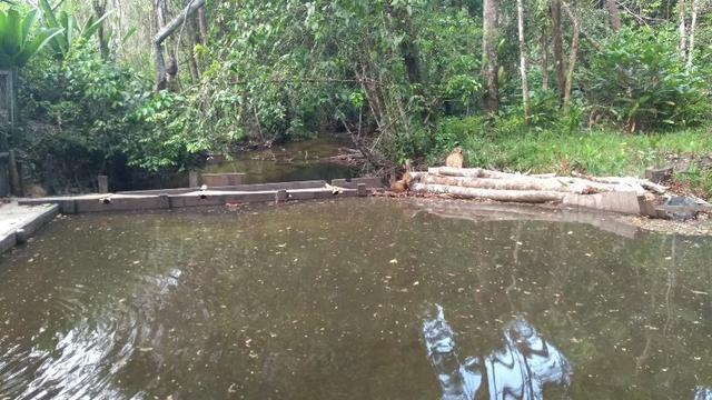 50 hectares a 25 km de castanhal por 250 mil zap * - Foto 8