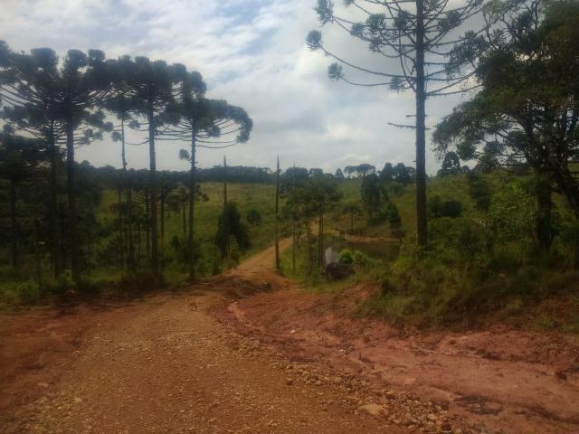 Fazenda em Tijucas do Sul -PR - Foto 14