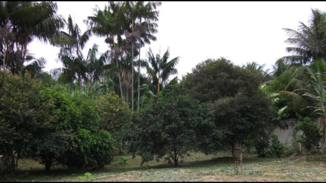 Chácara de 3.000m2 - Brisamar - Costa Verde (moradia, veraneio ou comércio) - Foto 7