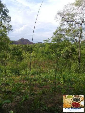 FAZENDA À VENDA EM RECURSOLÂNDIA - TO - DE 156 ALQUEIRÕES (Dupla aptidão) - Foto 9