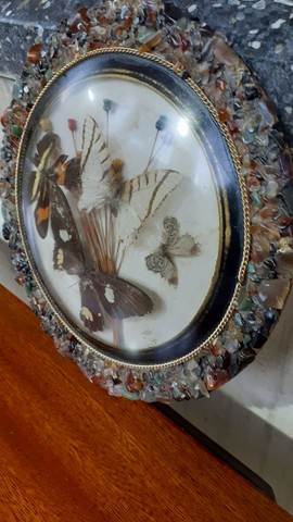 Quadro antigo com borboletas - Foto 3