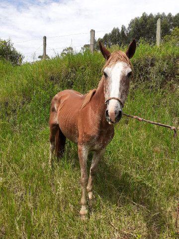 Égua mansa para criança  - Foto 6