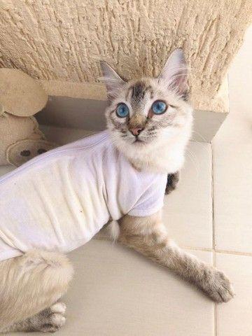 Linda gatinha para adoção! - Foto 4