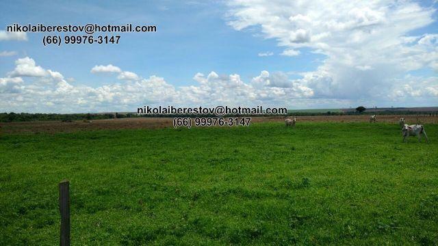 Arrenda fazenda 7.800 hectares vale do xingu mt nikolaiimoveis