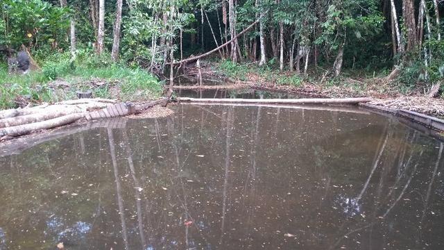 50 hectares a 25 km de castanhal por 250 mil zap * - Foto 3