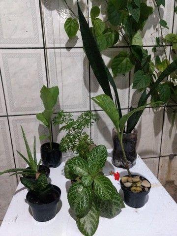 MUDA DE PLANTAS | qualquer muda por 10 reais - Foto 6