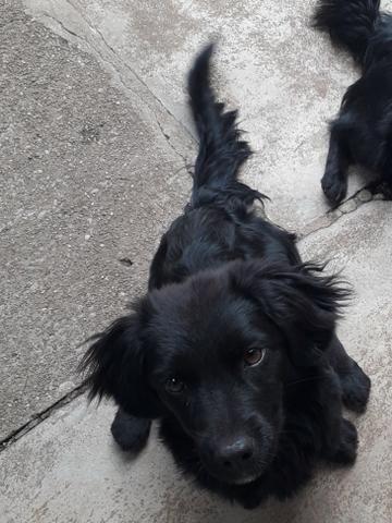 Doação de 2 cachorrinhas