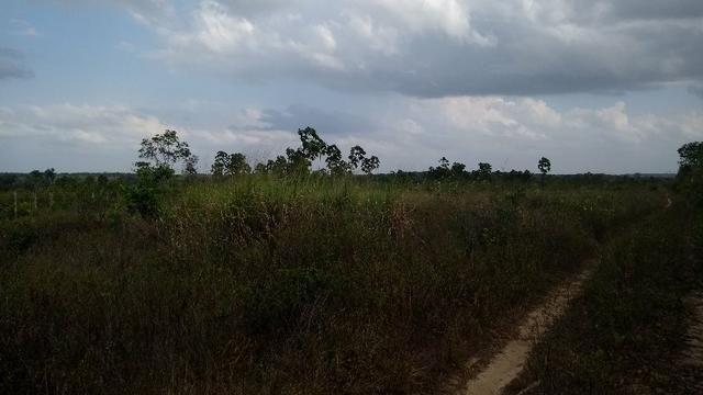 50 hectares a 25 km de castanhal por 250 mil zap * - Foto 10