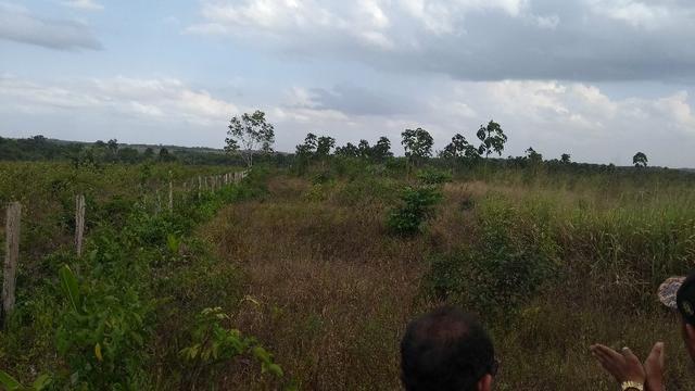 50 hectares a 25 km de castanhal por 250 mil zap * - Foto 17