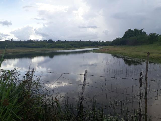 Granja com 15 hectares em vera cruz com riacho perene etc - Foto 5