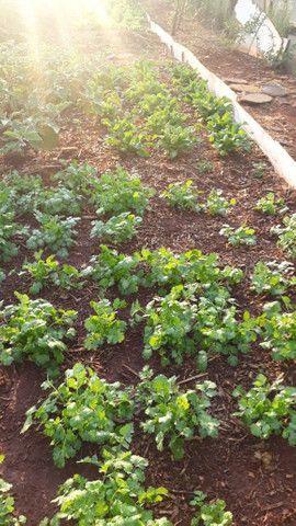Verduras frescas - Foto 4