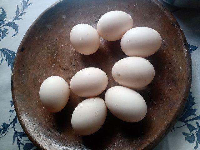 Ovos de pata  - Foto 2