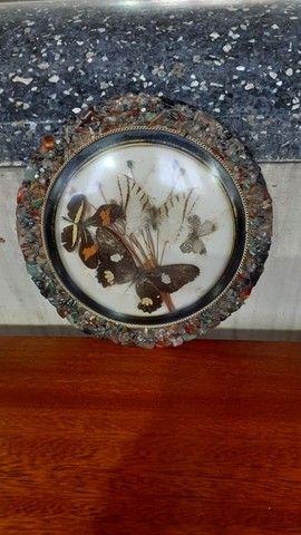 Quadro antigo com borboletas - Foto 4