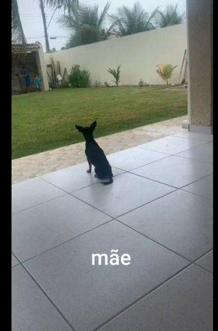 Cachorro filhote  - Foto 4