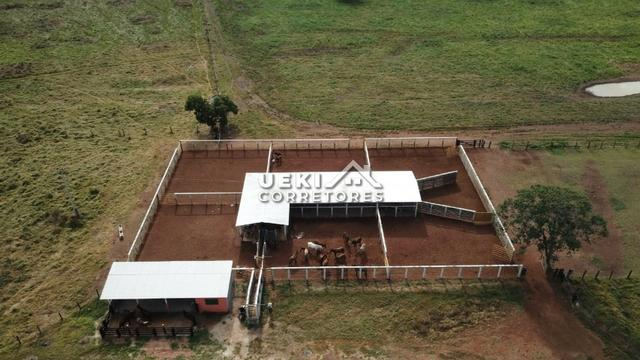 Área rural 47.000 ha - Dupla Aptidão - Foto 9