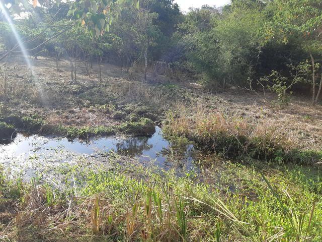Urgente Vendo Meio Alqueire Prox a Teresópolis e Goianápolis Nerópolis Urgente Muita Água - Foto 7