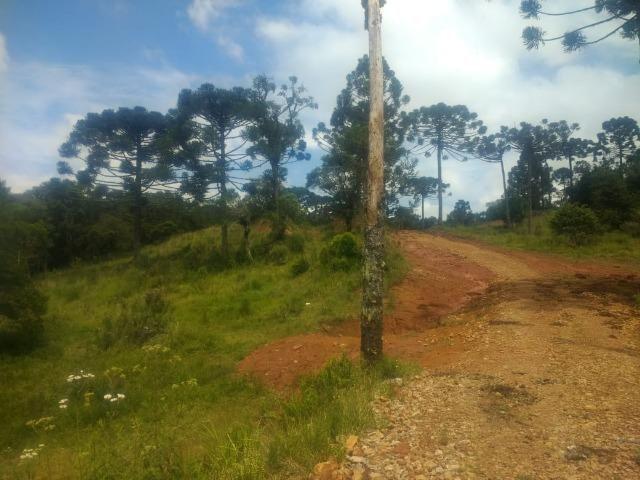 Fazenda em Tijucas do Sul -PR - Foto 9