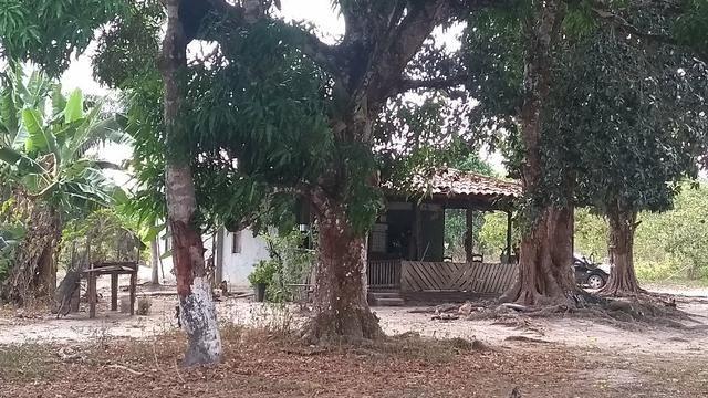 50 hectares a 25 km de castanhal por 250 mil zap * - Foto 15