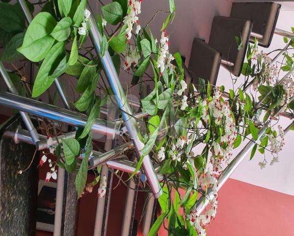 Sobrado 360m², para locação na Vila Bastos - Santo André - Foto 18