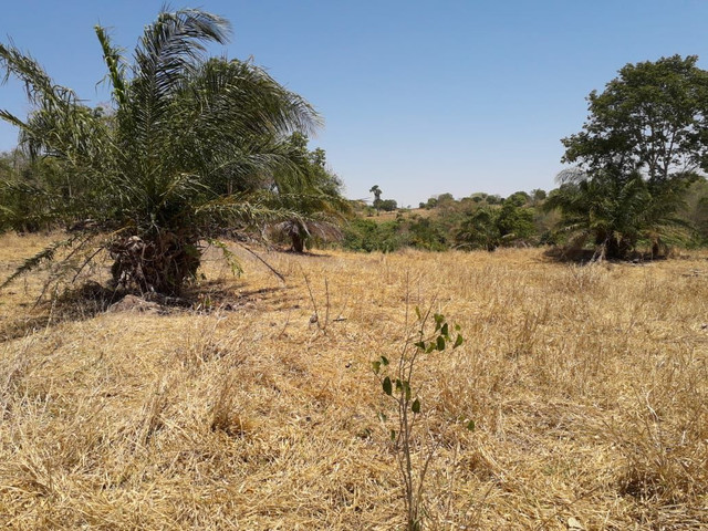Terra assentamento 30 anos 7 alqueires  - Foto 12