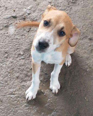 Lindos cachorrinhos para adoção - Foto 3