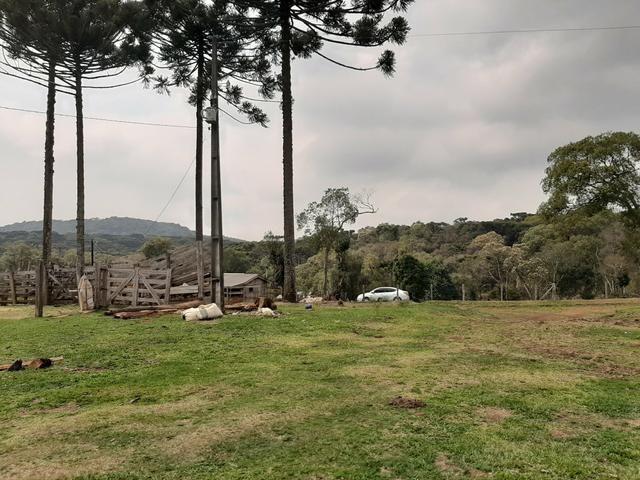 Fazenda de 100 Alqueires. 70 de capoeira - 16 km da Colônia Vitória. Guarapuava PR - Foto 4