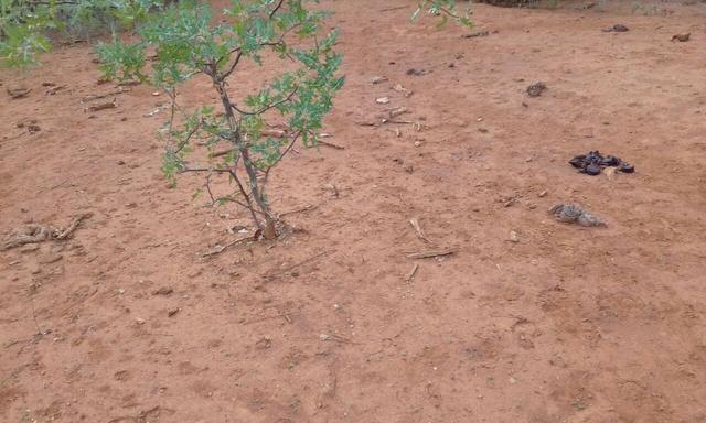 Exploração de Minério , terreno para plantação e criação de gado - Foto 15