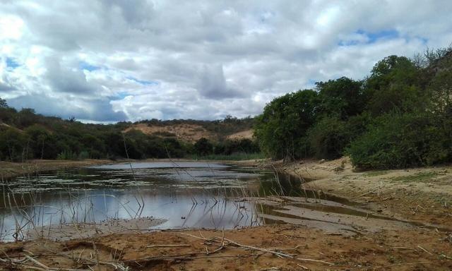 Exploração de Minério , terreno para plantação e criação de gado - Foto 7