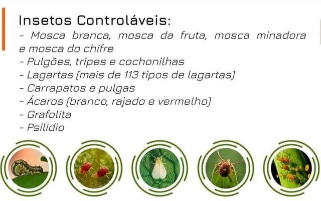 Adubo liquido Concentrado - Foto 3