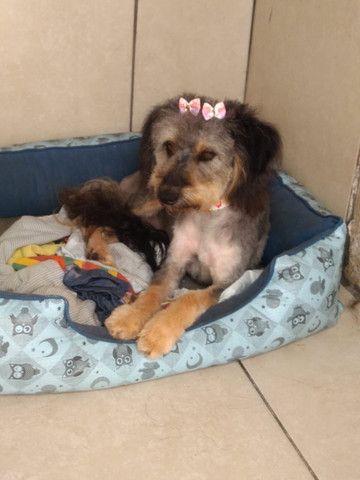 Lindos cachorrinhos para adoção - Foto 2