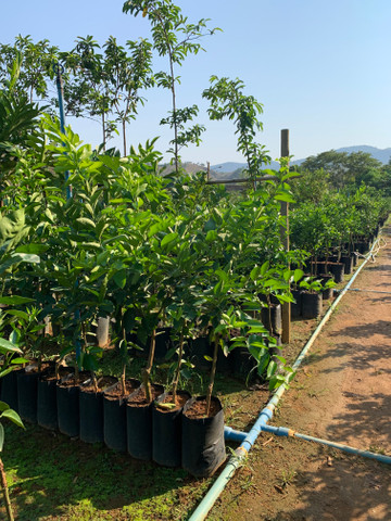 Produção de plantas - Foto 6