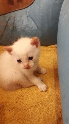Gatinhos para adoção - Foto 3