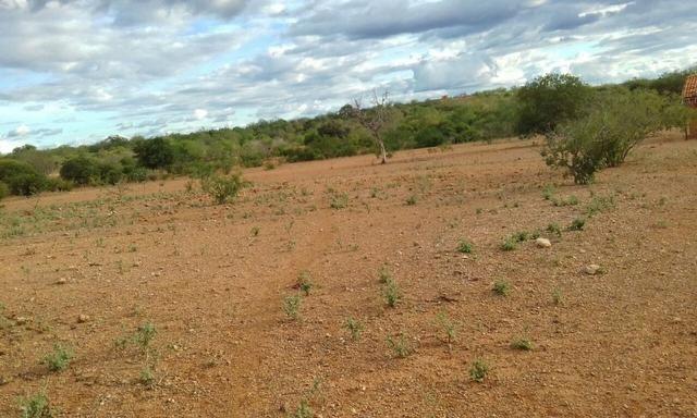 Exploração de Minério , terreno para plantação e criação de gado - Foto 10