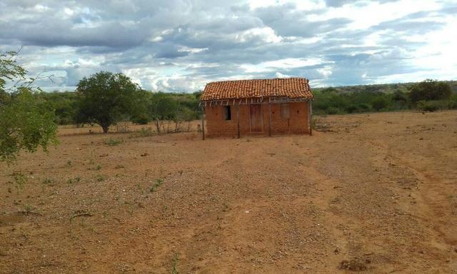 Exploração de Minério , terreno para plantação e criação de gado - Foto 16