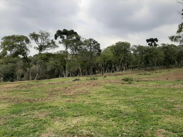 Fazenda de 100 Alqueires. 70 de capoeira - 16 km da Colônia Vitória. Guarapuava PR - Foto 5