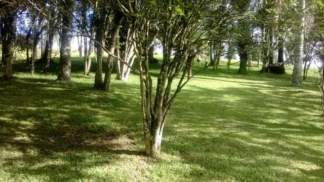 Maravilhoso Sítio - 10 hectares - Lages - Foto 3