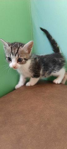 Doação de gatos pessoas responsáveis. - Foto 5