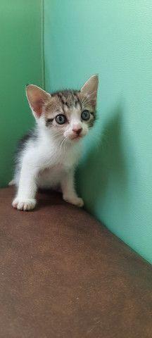 Doação de gatos pessoas responsáveis. - Foto 6