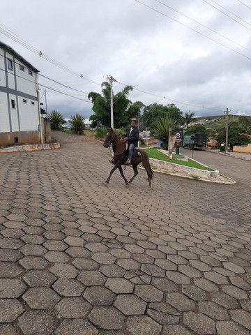 Cavalo de sela  Mangalarga Marchador  - Foto 3