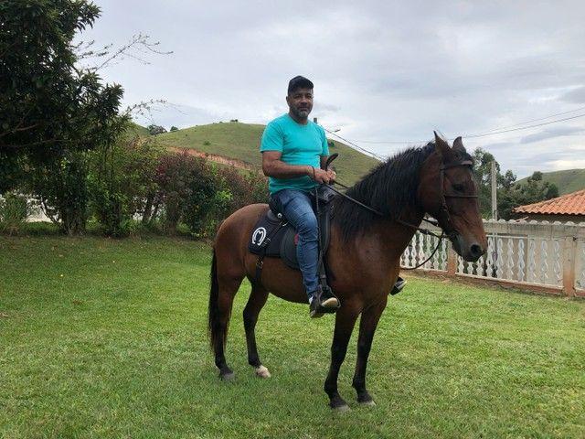 Vendo cavalo puro de marcha picada  - Foto 4