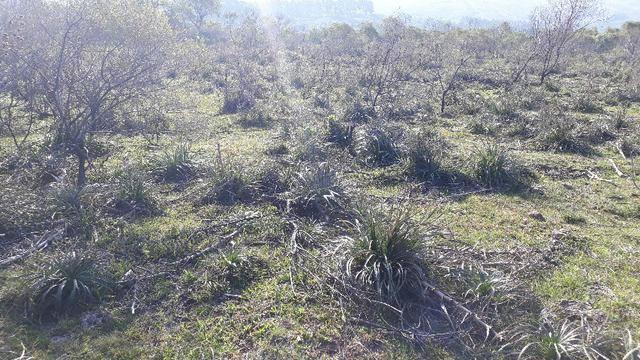 140 hectares de campo