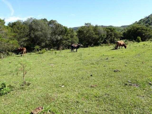 174 hectares de campo e matos